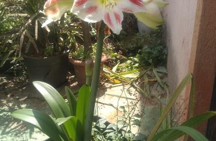Terreno para Venda, Jardim Planteucal