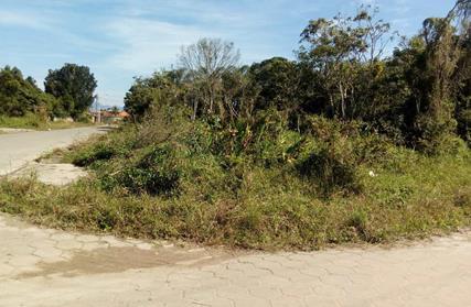 Terreno para Venda, Palmeiras