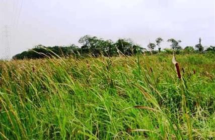 Terreno para Venda, Boungaville