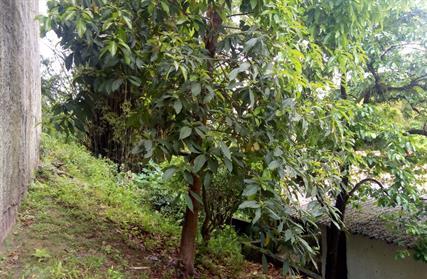 Terreno para Venda, Vila Bela