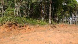 Chácara para Venda, Horto Florestal