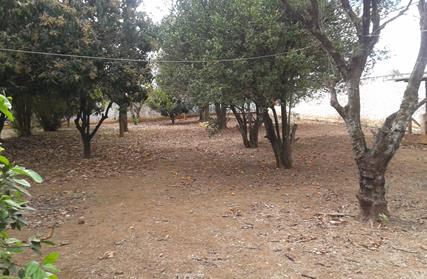 Terreno para Venda, Parque Ramos Freitas