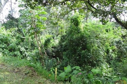 Terreno para Venda, Tucuruvi