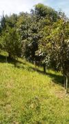 Terreno para Venda, Jardim Floresta