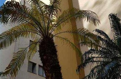 Apartamento para Alugar, Vila Dalva