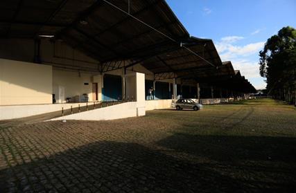 Galpão / Salão para Alugar, Vila Leopoldina
