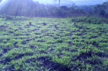Terreno para Venda, Santa Ines