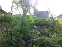Terreno para Venda, Butantã