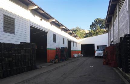 Galpão / Salão para Alugar, Vila Menk