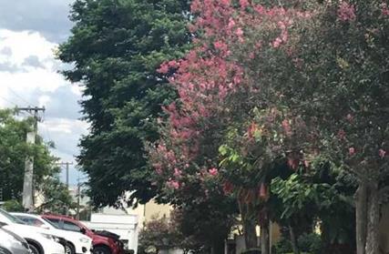 Condomínio Fechado para Alugar, Vila São Silvestre